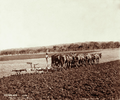 Queensland State Archives 3983 Twelve horses ploughing for wheat with a six furrow plough Green Hills Farm near Warwick 4 May 1894.png