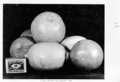 Queensland State Archives 4267 Fruit grown at Boulia Queensland 1950.png