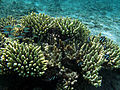 Réunion Lagune Salines les-bains 5.jpg