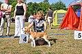 Rēzeknes suņu izstāde 2011.gada 7.augustā - panoramio (5).jpg