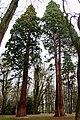 Ratmerice sequoia.jpg