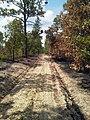 Rattlesnake Branch Fire 1 (7267407632).jpg