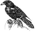 Raven 2 (PSF).png