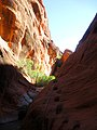 Red Reef Trail in Red Cliffs Recreation Area DyeClan.com - panoramio (3).jpg