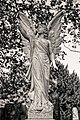 Reeves family grave angel City of London Cemetery monument 4 DXO FilmPack Ilford Delta 400.jpg