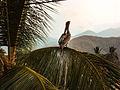 Reponsando en una palma de playa.jpg
