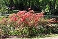 Rhododendronpark Bremen 20090513 224.JPG