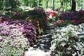 Rhododendronpark Bremen 20090513 246.JPG