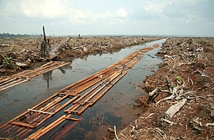 Palm oil production in Indonesia - The remains of a peat forest in Indragiri Hulu, Riau Province, Indonesia to make way for oil palm plantation.