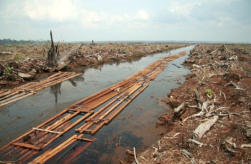 Riau deforestation 2006.jpg