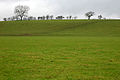 Ribble flood plain - geograph.org.uk - 881749.jpg