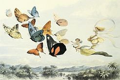 Richard Doyle, illustration from In Fairyland, 1870.jpg