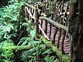 Rickerty bridge in Puzzlewood - July 2011 - panoramio.jpg