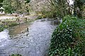 River Cerne - geograph.org.uk - 1193718.jpg