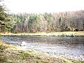 River Dee, Girnals Beat - geograph.org.uk - 1184862.jpg