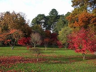 Roath Park - Autumn colours, Roath Park