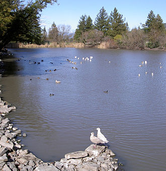 Roberts Lake - birds on Roberts Lake in 2009