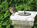 Robin on sundial - geograph.org.uk - 864965.jpg