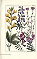 Rocky mountain flowers (Plate 27) (6279688855).jpg