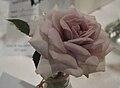 Rosacafeole.jpg