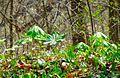 Rosaryville State Park Apr 10, 2017, 11-27 AM edit (33629855100).jpg