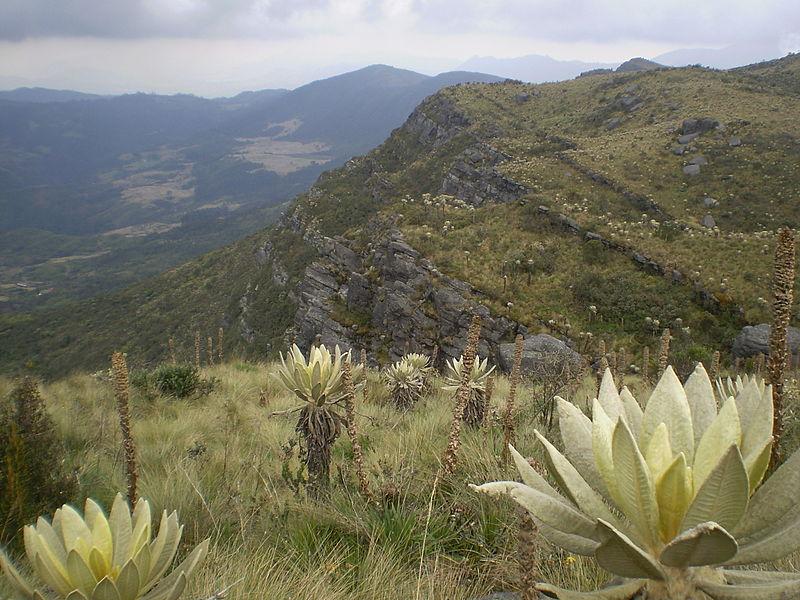 帕拉莫高原上獨特的生態環境;圖片來源:Friedrich Kircher / WIKI