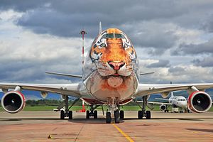 "Rossiya Airlines - Rossyia's Boeing 747-400 at Vladivostok International Airport, wearing the new livery in campaign ""Caring for Tigers together"" of saving the Siberian tiger subspecies"