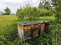 Ruggeller Riet-Beehive-01ASD.jpg