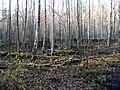 Ruins of the Finnish manor - panoramio.jpg