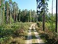 Rumšiškių miškas 2.JPG
