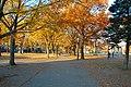 Salem Common Fall.jpg
