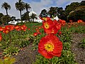 San Francisco - Conservatory of Flowers - 20180404112306.jpg