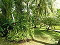 Sankyo Garden - DSC01233.JPG