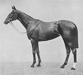 Saucy Sue British Thoroughbred racehorse