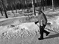 Sauvakavelija Aurejärvellä.jpg