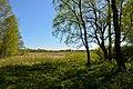 Schleswig-Holstein, Borgwedel, Naturschutzgebiet Esprehmer Moor NIK 1792.jpg