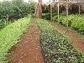 School garden at Mahiga Girls School (3504556192).jpg