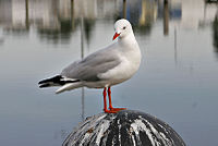 Seagull on sale pier