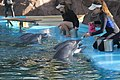 Secret Garden Dolphins Being Fed After Performance.jpg