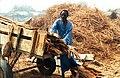 Senegal bois pour le fumage du poisson 800x600.jpg