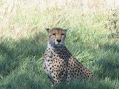 Serengeti National Park-108461.jpg