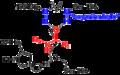 Serine protease oxyanion hole.png