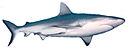 Shark-stub.jpg