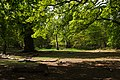 Sherwood Forest, May, 2017-5.jpg