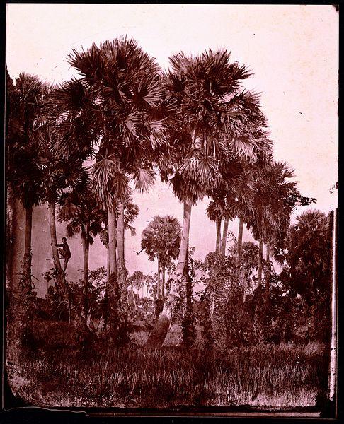 palms - image 7