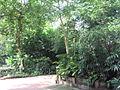 Singapore Zoo 15.JPG