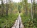 Sippulanniemi nature trail - duckboards.jpg