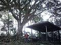 Situs Prasasti Cipaku, Mrebet, Purbalingga.jpg