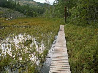 Skuleskogen National Park - A wetland in the park