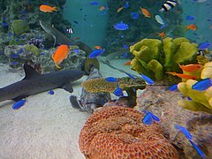 Sony aquarium 2.jpg